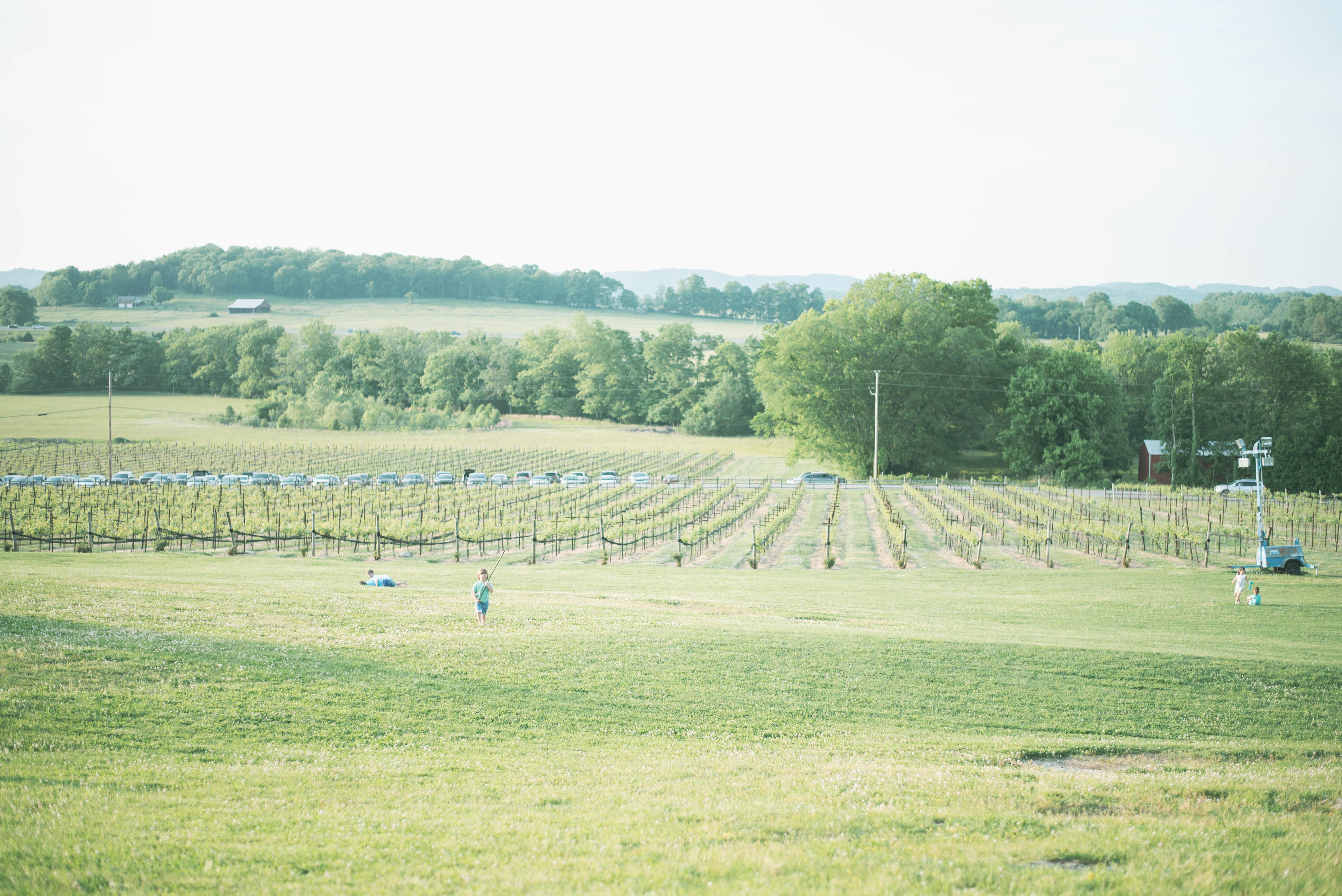 family friendly arrington vineyards nashville